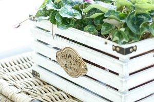 Plant in vintage box