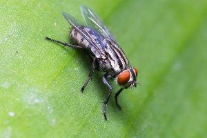 Macro fly one