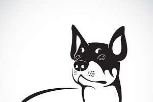 Vector image of an chihuahua dog