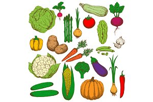 Farm fesh vegetables set