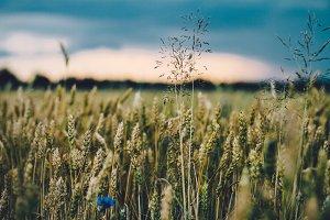 Crop field #3