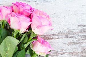 Pink fresh roses