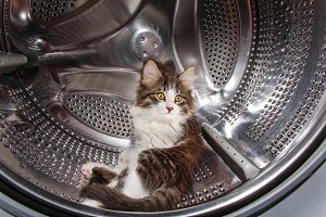 Kitten hiding in the washing machine
