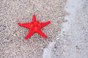 A red sea star