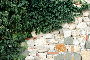 Stone wall with lvy