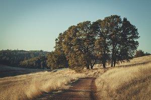 Cronan Ranch Trail #1
