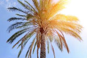 Beautiful palm trees on blue sky