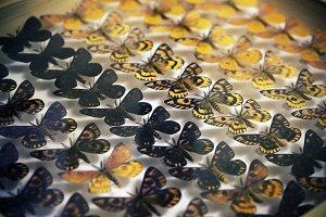 Moths in Case
