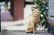 Ginger cat sitting alone on a street and looking seriously