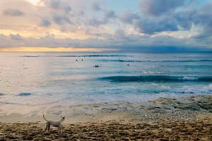Soft sunset with a dog watching sea beauty at a fantastic sea beach in Bali