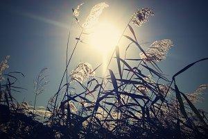 Grass in the Sun Light