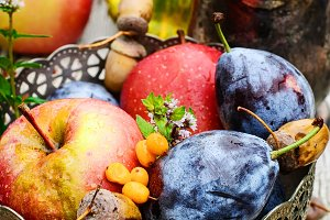 Fruits fall harvest
