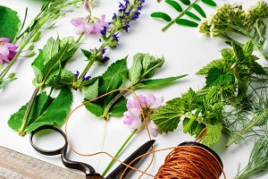 Herbarium of plants