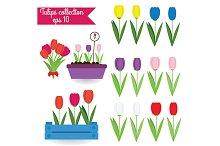Tulips. Vector illustration