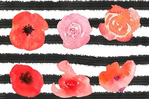 Watercolor flowers of rose and poppy