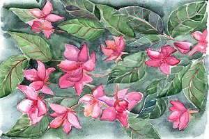 Watercolor pink flowers background