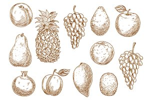 Sketched fresh fruits