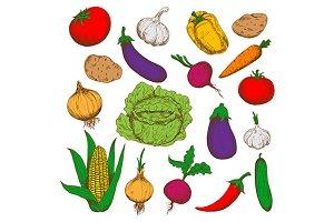 Colorful sketched vegetables