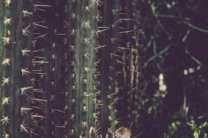 Cacti at the Gardens