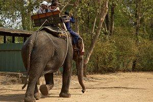 Elephant for tourists