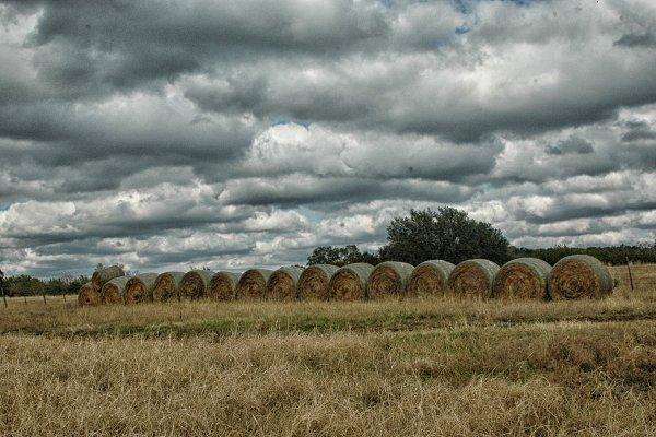 row of hay bales in a gloomy field