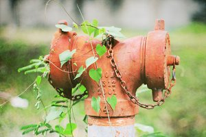 Old fire hydrant and ivy plant