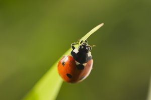 Beetles ladybug in green grass