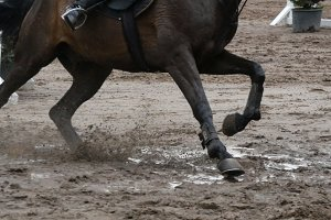 Close up of horse feet. Horse runs on the sand and jumps through a barrier.