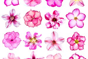 Collection of pink flowers