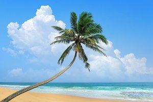 Palm on a beach
