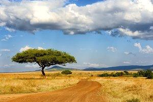 Savannah landscape with tree