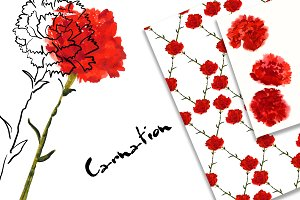 №143 Carnation watercolor