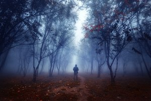 Man in mist, forest and nature
