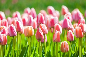 Beautiful flowers in spring garden