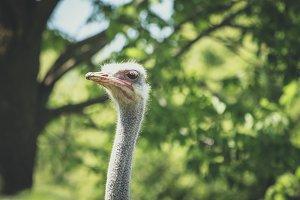 Mr Ostrich headshot