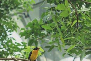 Yellow and black bird