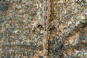 Lizard in Camouflage