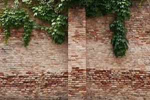 Old brick wall garden