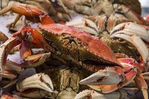 Fish Market Crab Display