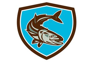 Cobia Fish Diving Down Shield Retro