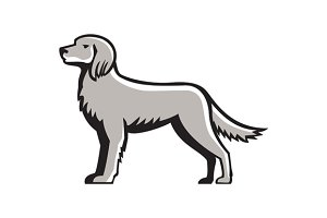 English Setter Standing Side View