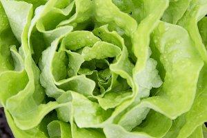 fresh bio salad urban gardening