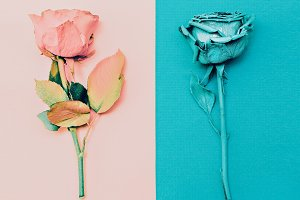 Minimalism fashion art. Roses