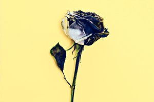 burnt rose. dramatic fashion