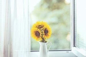 Sun flower in the window