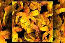 imprints lily flowers