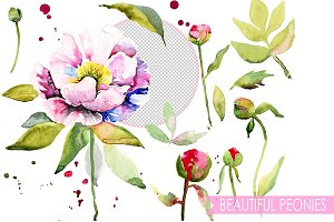 Peony watercolor set.