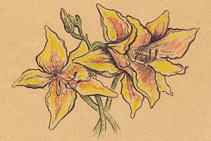 Sepia yellow lilies craft sketch