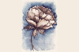 Watercolor vintage peony flower