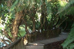 Garden Path-Cornwall